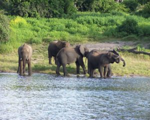 jaldapara-wildlife-elephant