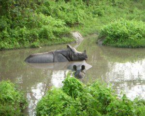 jaldapara-wildlife-rhino